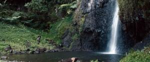 Un peintre en recherche d'une nouvelle inspiration à Tahiti. DR