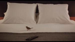 BIRD_PEOPLE_MoineauBV-300x168