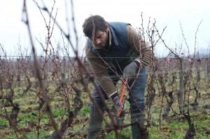 Jean (Pio Marmaï) au travail dans la vigne. DR